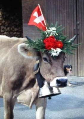 Pretty_swiss_cow_with_bell