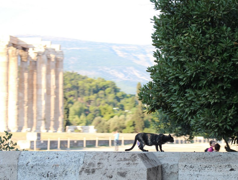 Meet the animals of Athens