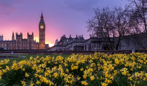 House sitting London - how and why you should get started here
