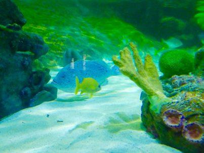National-sealife-birmingham
