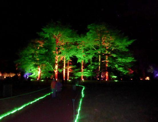 Enchanted_Christmas_Westonbirt_Arboretum