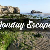 Monday Escapes #55