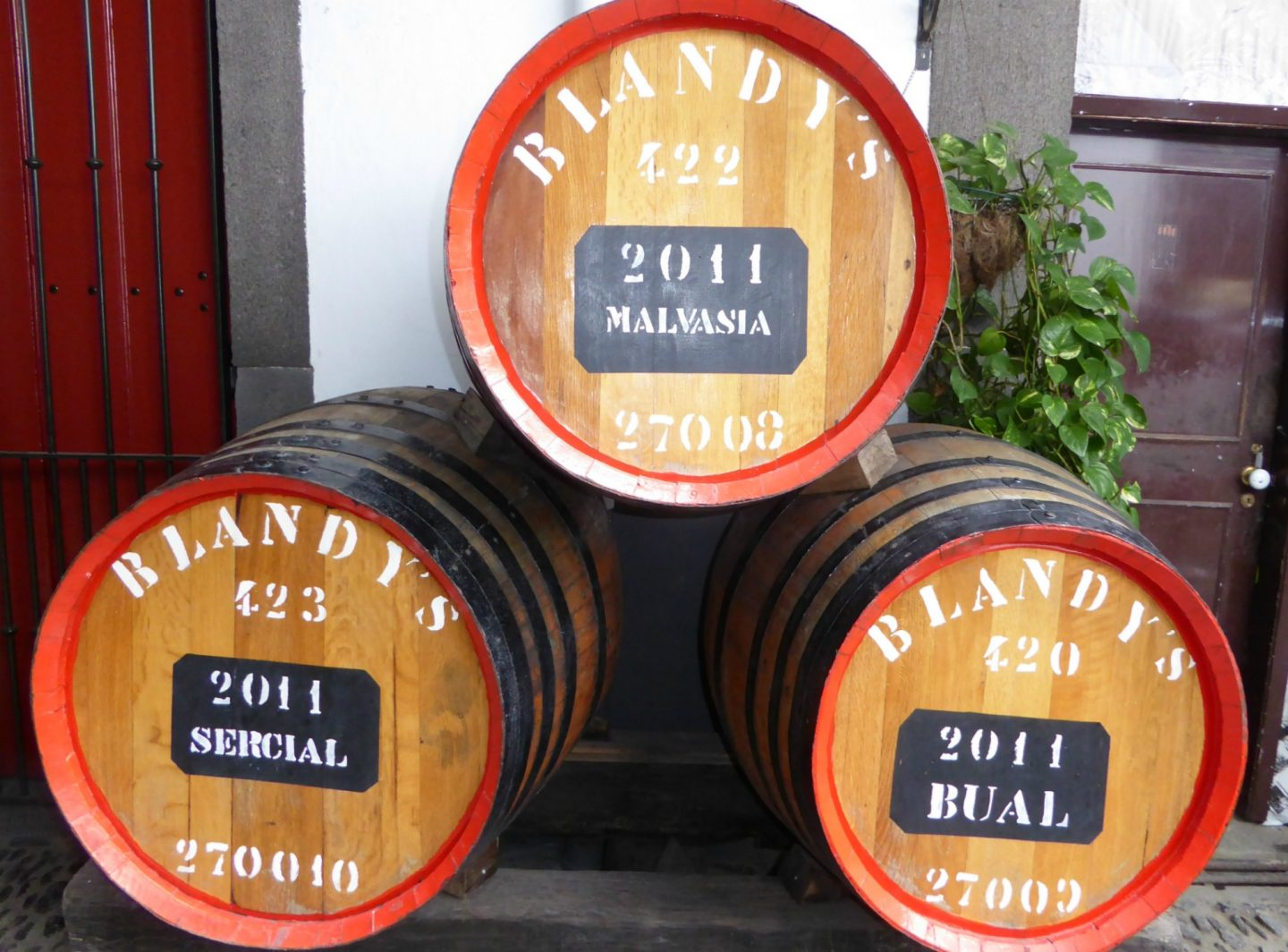 how to make the most of a cruise ship call into Madeira wine lodge