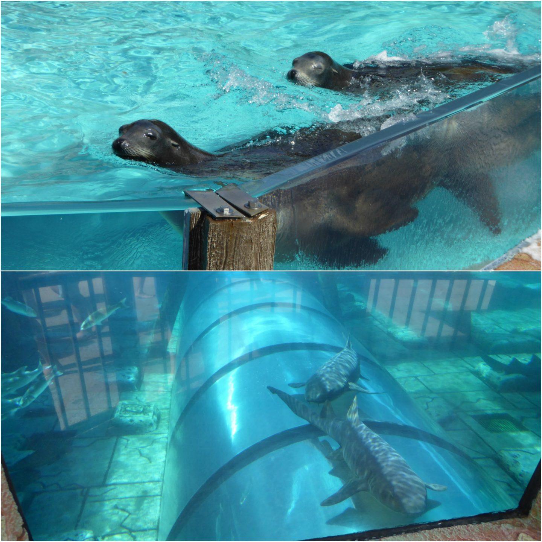 Water Kingdom Siam Park Tenerife review