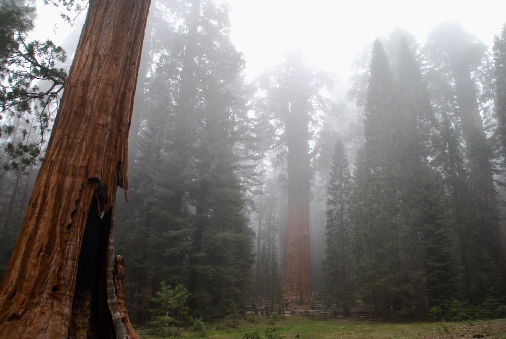 Sequoia National Park Verenigde Staten