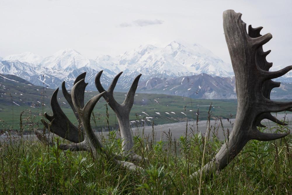 Route Alaska Denali National Park Alaska Verenigde Staten