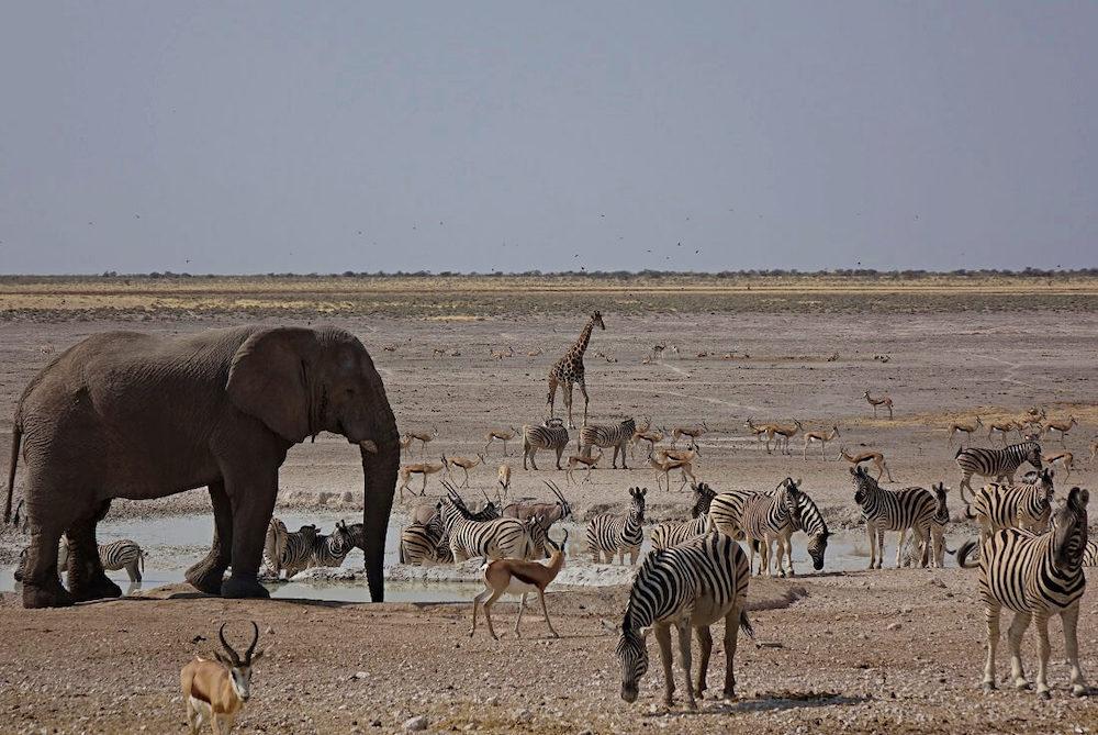 De mooiste nationale parken ter wereld Etosha National Park Namibië