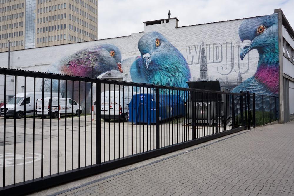 Hello Pigeons Super A street art Antwerpen Berchem België