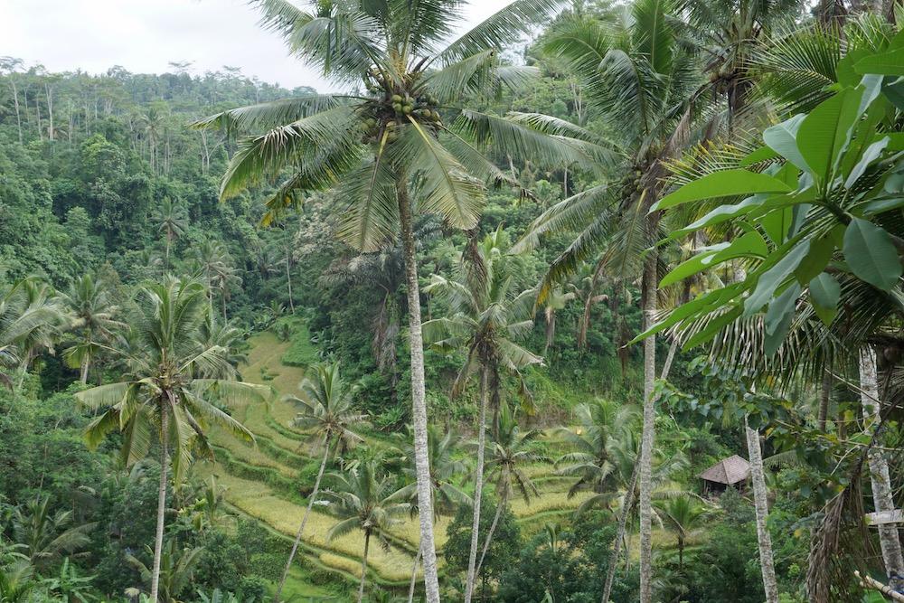 Gunung Kawi Ubud Bali Indonesië