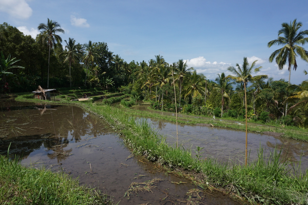 Rijstvelden Munduk Bali Indonesië