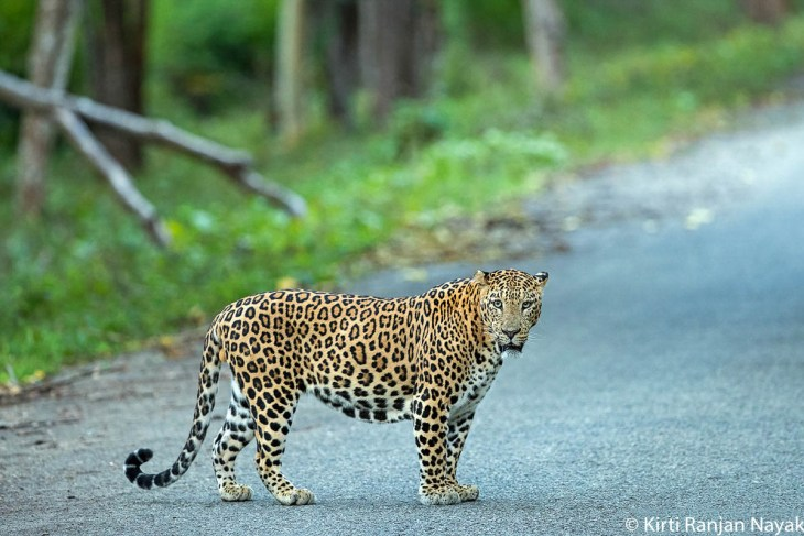 Coorg Tour Package 4 Nights 5 Days 46
