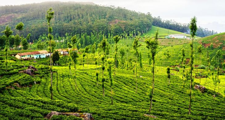 Ooty Tour Package 2 Nights 3 Days 3