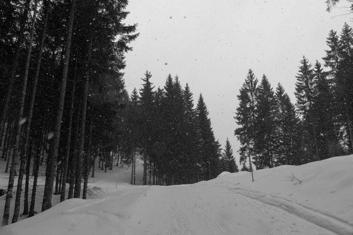 Rodelbahn zur Schwarzenberghütte