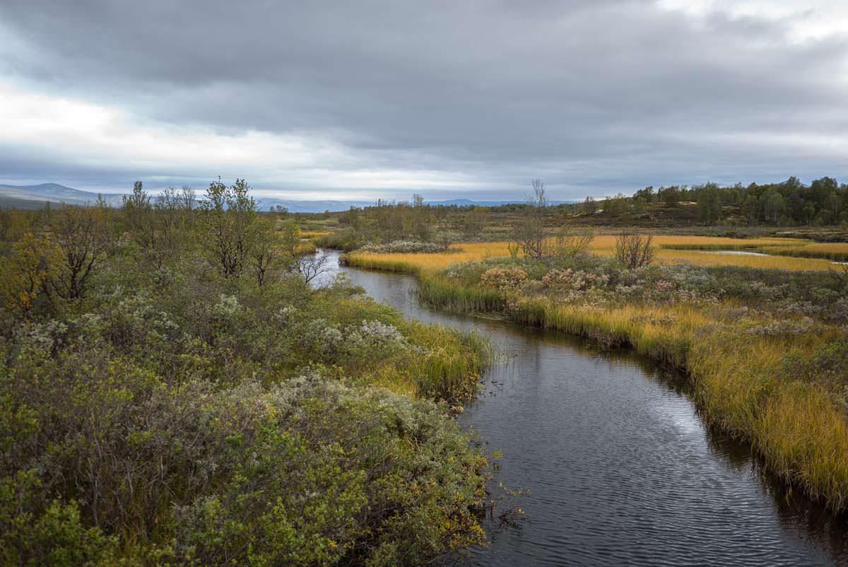 Moor bei Furuhaugli in Norwegen