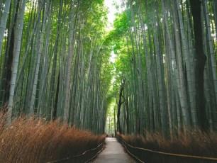 itinéraire-3-semaine-japon-29