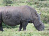 Thandi