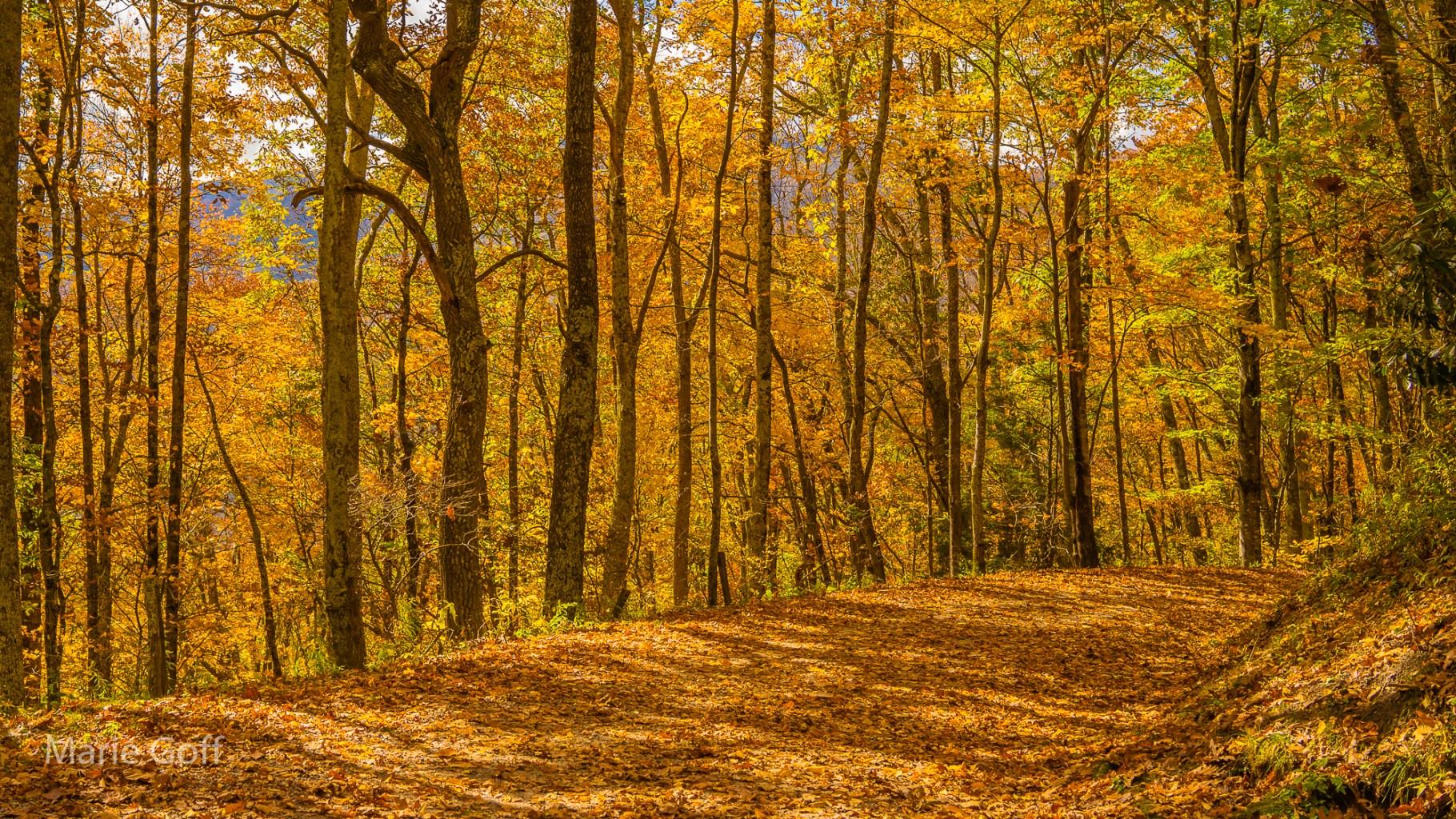 yeallow autumn leaves