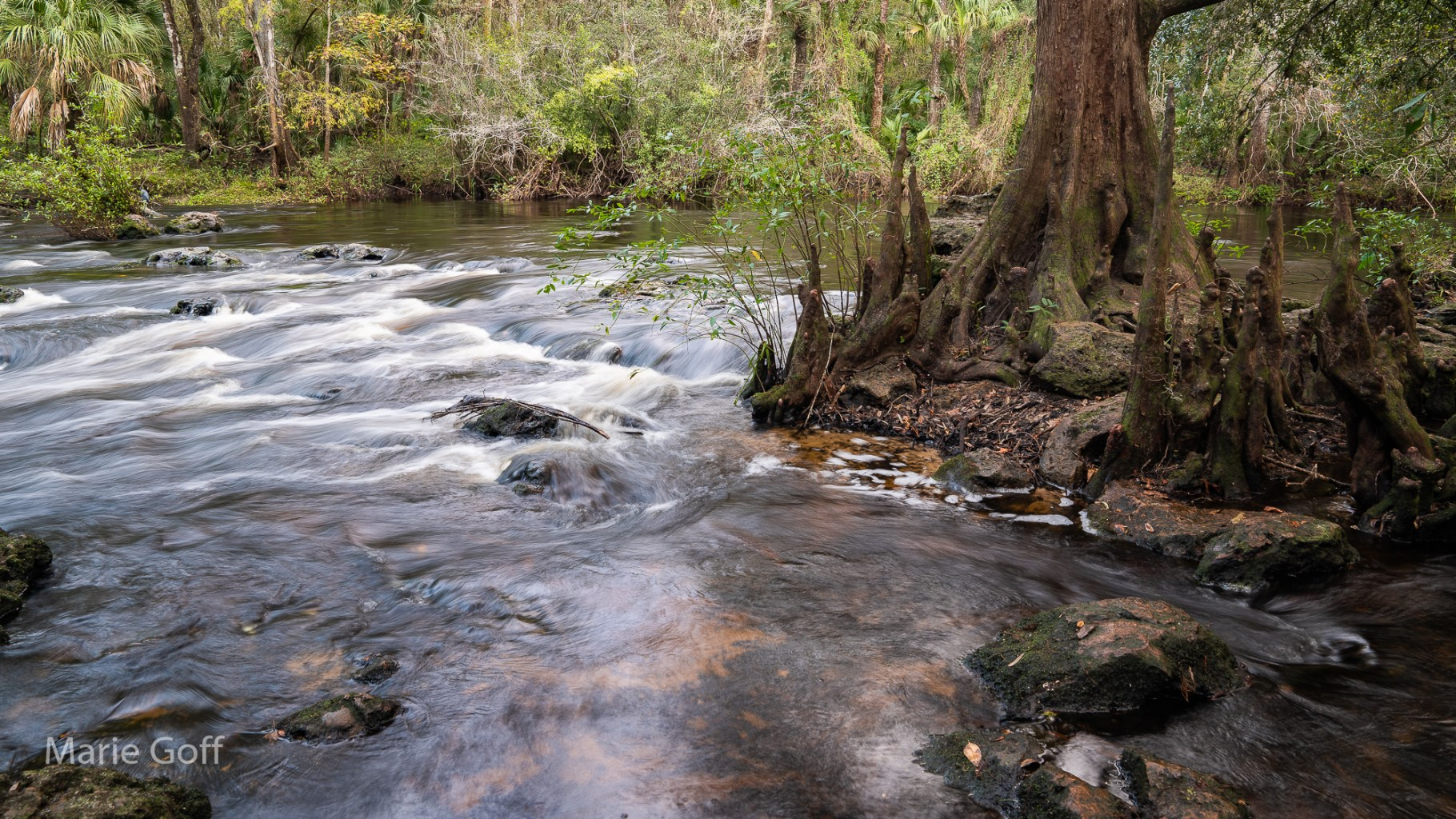 River with Cypress Tree Knees
