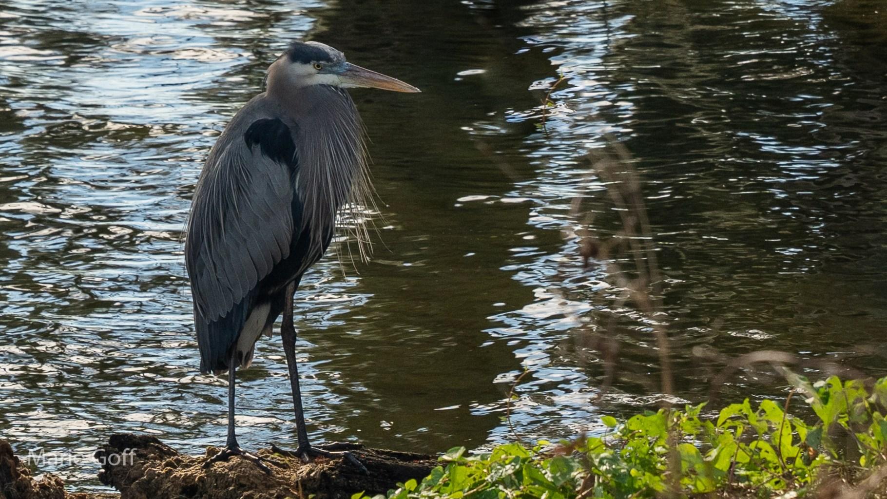 Bird standing in water
