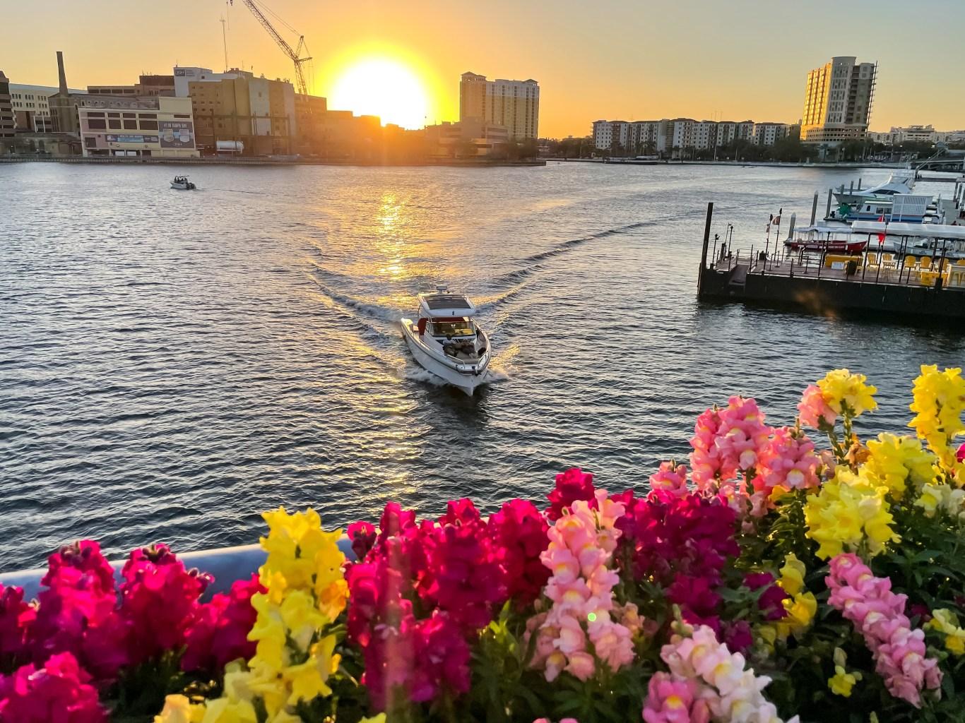 Enjoy Tampa Florida like a local