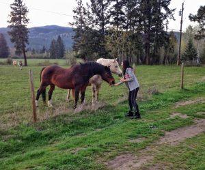 Kashlee feeding horses