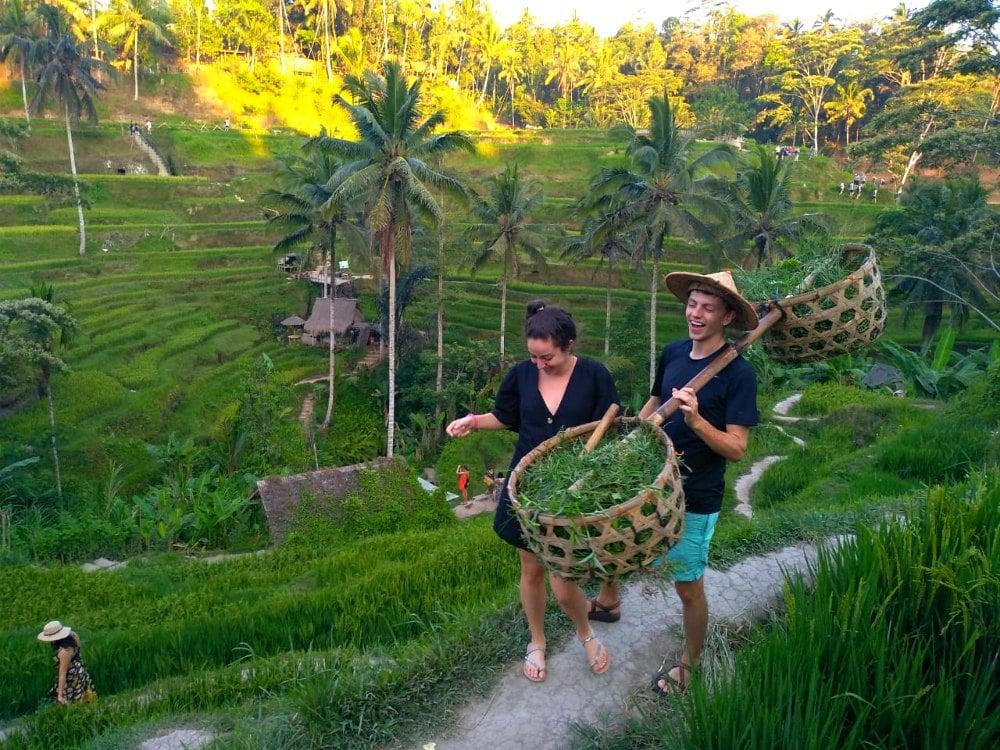 Bali Private Tour Rice Terrace