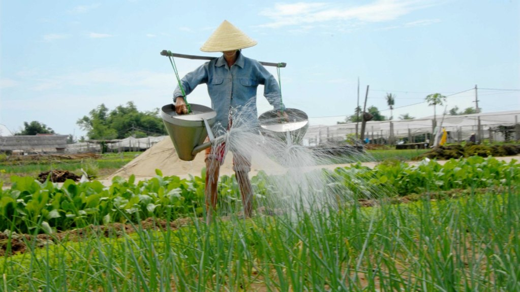 Things to do in Hoi An Tra Que Herb Village