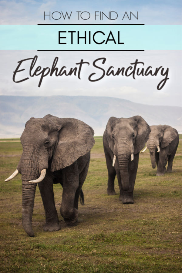 How to find an ethical elephant sanctuary