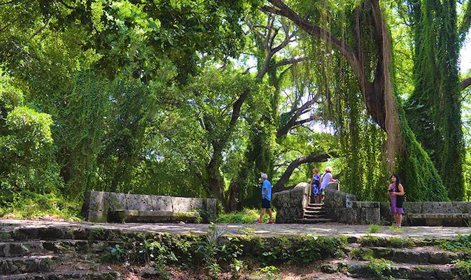 El bosque Habana