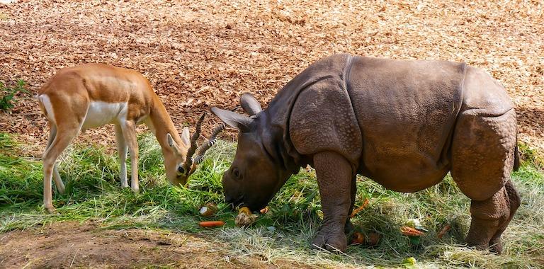 antelope and rhino on african safari