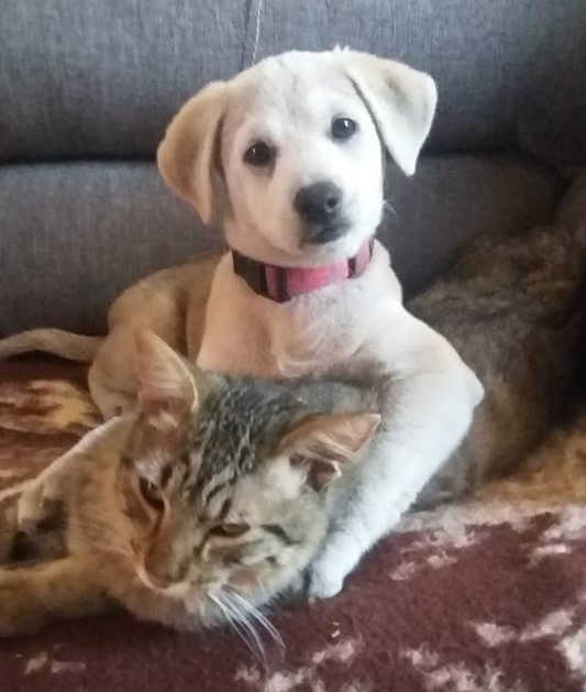 Wheelchair Warren - Dog and Cat
