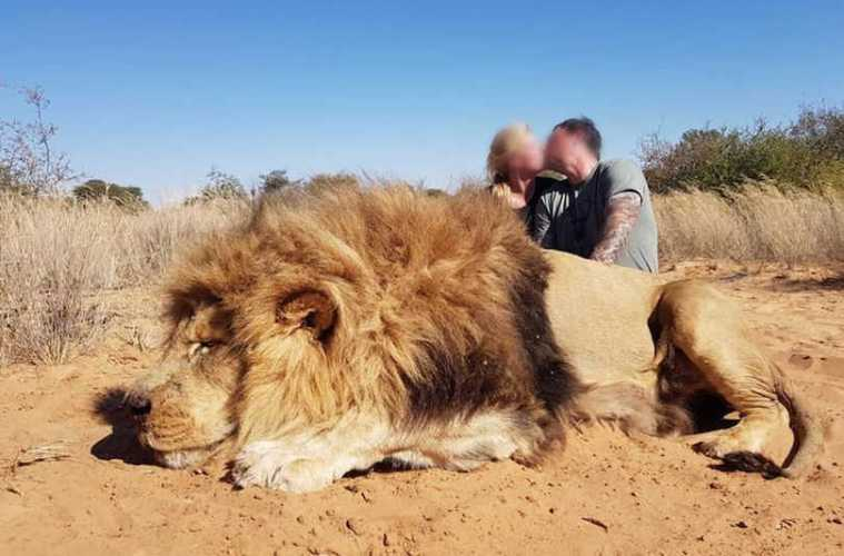 Couple KIll LIon