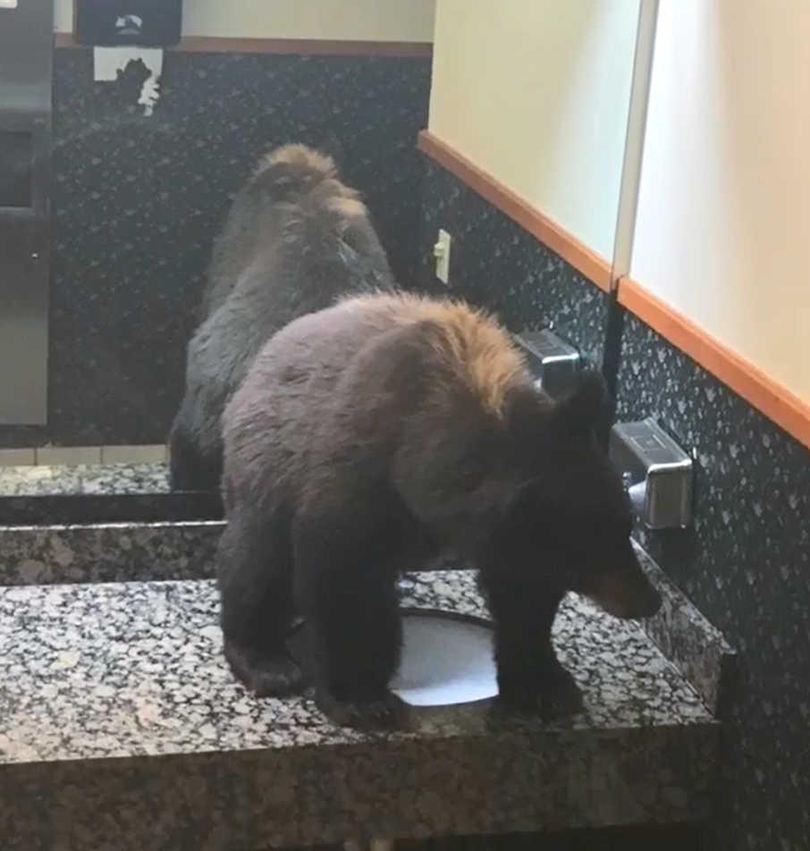 Bear in Washroom