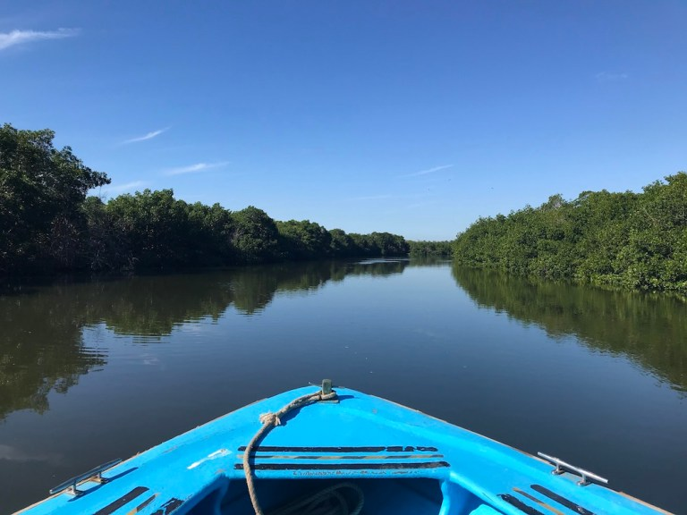 Mangroves - Mazatlán Jungle and Stone Island Tour Review
