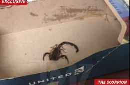 Scorpion Crawls Inside Woman's Pants and Stings Her On United Airlines Flight