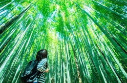 things to do in Kamakura Japan - visit the bamboo groves