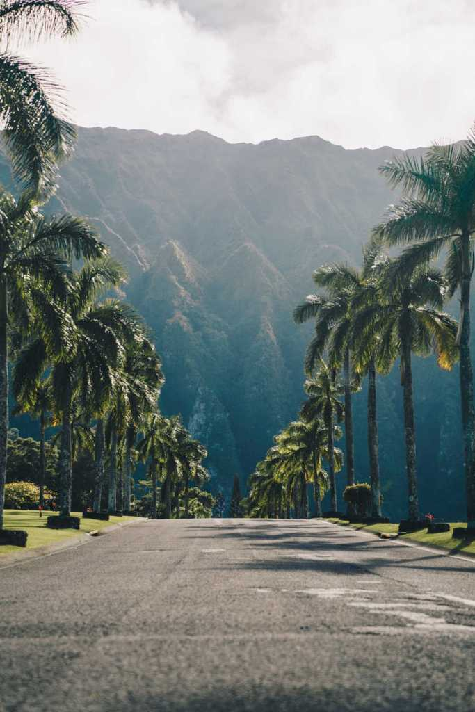 Hawaii Road With Palm trees