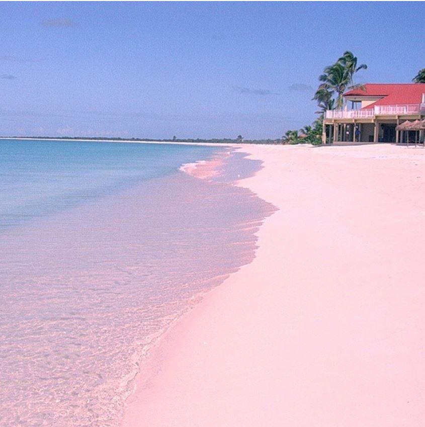 pink sand beach barbuda