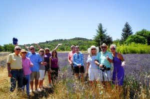 july-lavender-provence-tour
