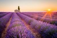 Provence Lavender tours