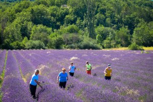 provence-2016-lavender-27