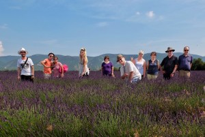 provence-lavender-walk