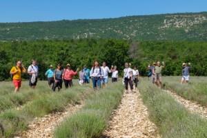 2018-Provence-Lavender-Season-19
