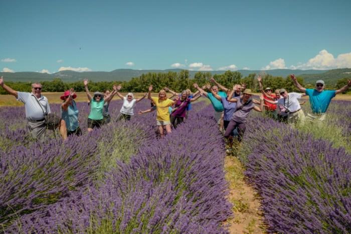 Top 10 2019 Provence Lavender Season Tour Dates