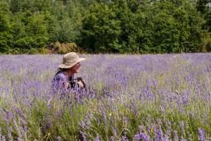 2018-July5-lavender-josee