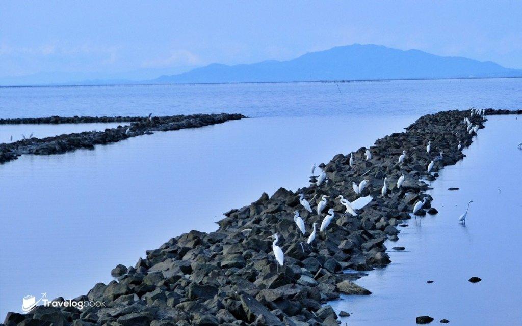步行到海床路的沿途,岸邊鶴踨處處。