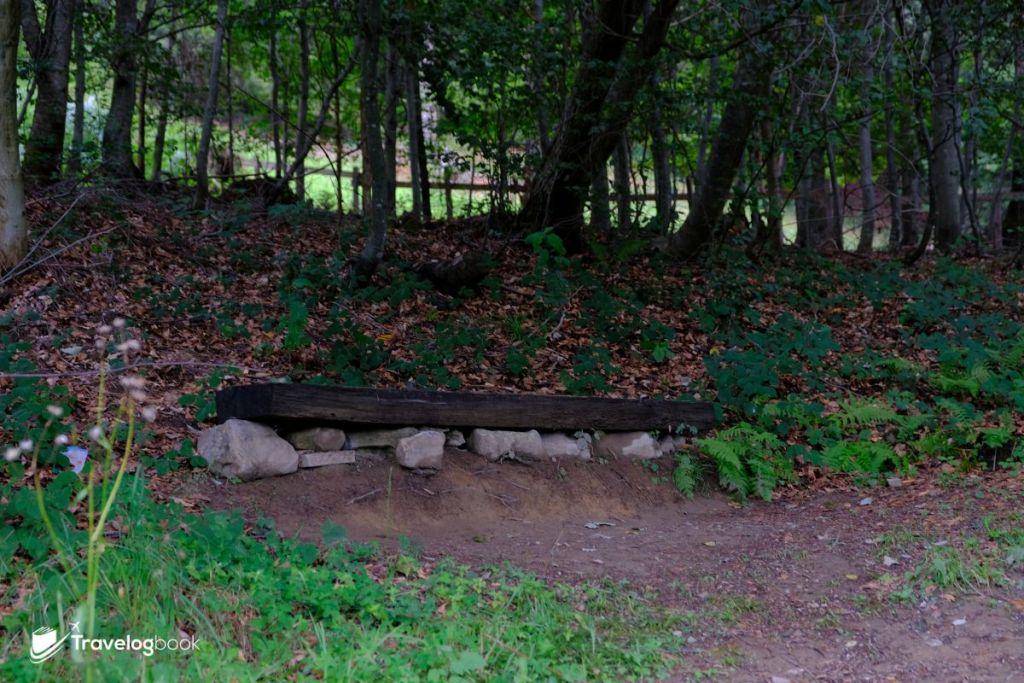 海迪和爺爺下山時,經常在這裏靜靜坐上一會,細聽林木的細語。