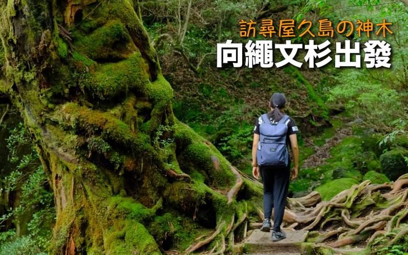 【日本】訪尋屋久島の神木 向繩文杉出發