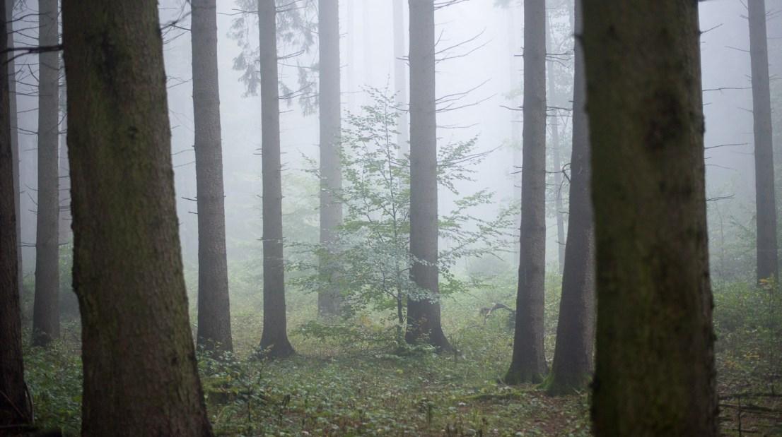 Fotografieren bei Nebel im Wald