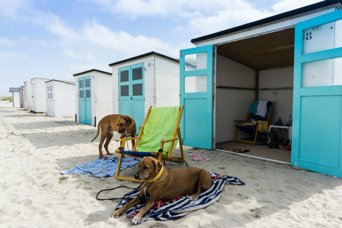 Hondenvakantie op Texel in Nederland
